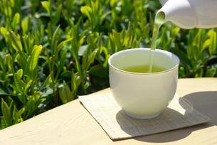 茶畑で日本茶を注ぐの写真素材 [FYI02834057]