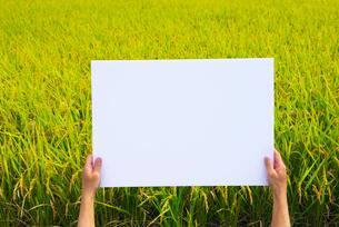 稲田でメッセージボードを持つ手の写真素材 [FYI02834058]