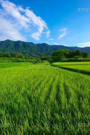 田んぼと耳納連山の写真素材 [FYI02834073]