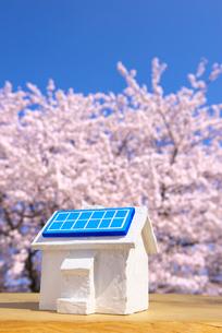 ミニチュアハウスと桜の写真素材 [FYI02834112]
