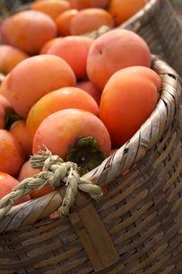 柿 の写真素材 [FYI02834133]