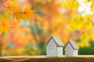 ミニチュアハウスと黄葉の写真素材 [FYI02834191]