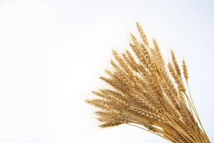 小麦の写真素材 [FYI02834349]