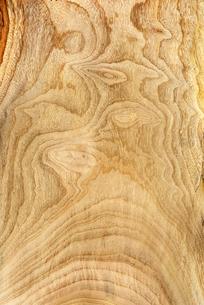 楠の写真素材 [FYI02834360]