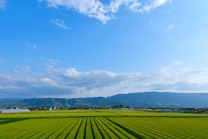 耳納連山を背景に麦畑の写真素材 [FYI02834425]