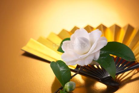 金色の扇子と椿の写真素材 [FYI02834731]