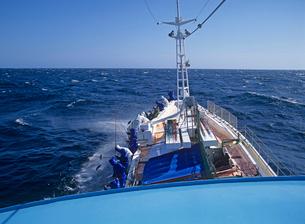 カツオ一本釣り漁の写真素材 [FYI02834734]
