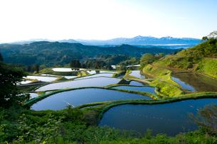 山古志の棚田の朝景の写真素材 [FYI02834776]