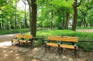 井の頭公園のベンチの写真素材 [FYI02835013]