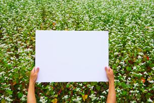 蕎麦畑でメッセージを持つ手の写真素材 [FYI02835313]
