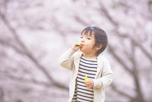 シャボン玉で遊ぶ子供と桜の写真素材 [FYI02835624]