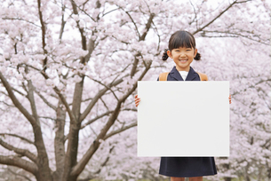 パネルを持った笑顔の小学生の女の子と桜の写真素材 [FYI02835632]
