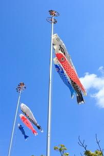信濃川感謝祭やすらぎ堤まつり こいのぼりの写真素材 [FYI02835828]