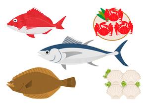 魚介(鮪、鯛、ヒラメ、カニ、ホタテ)のイラスト素材 [FYI02835928]