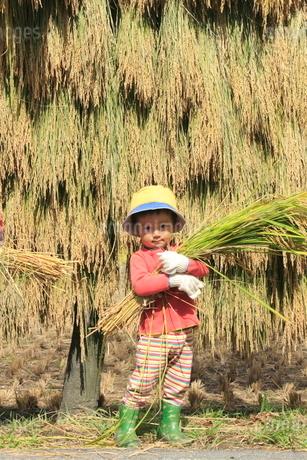 稲を抱えた男の子の写真素材 [FYI02836176]