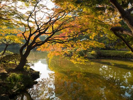 日比谷公園の紅葉の写真素材 [FYI02836575]