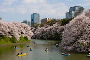 千鳥ヶ淵の桜の写真素材 [FYI02836607]