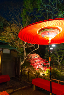 赤い傘と紅葉 縦位置の写真素材 [FYI02836615]
