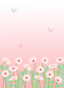 ペールピンクのガーベラと蝶のイラスト素材 [FYI02836751]