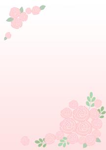 ピンクの薔薇のイラスト素材 [FYI02836753]