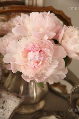 芍薬の花瓶活けの写真素材 [FYI02836786]
