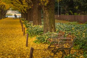 イチョウの落ち葉と長椅子の写真素材 [FYI02836789]