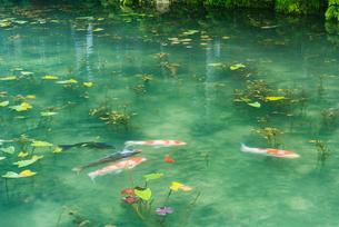 モネの池の写真素材 [FYI02836819]
