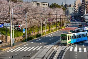 飛鳥山公園の桜と都電の写真素材 [FYI02836871]