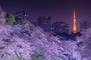 千鳥ヶ淵の桜ライトアップと東京タワーの写真素材 [FYI02837173]