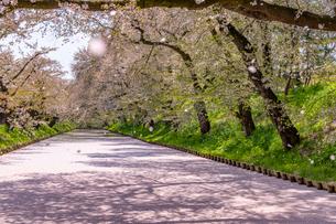 弘前公園の桜吹雪の写真素材 [FYI02837194]