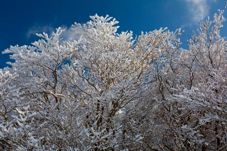 御在所の樹氷の写真素材 [FYI02837234]