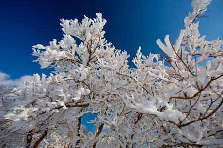 御在所の樹氷の写真素材 [FYI02837259]