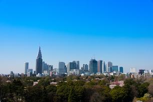 新宿ビル群と春の新宿御苑の写真素材 [FYI02837433]