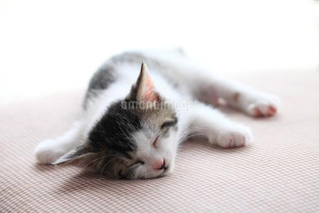 両足を広げ眠る子猫の写真素材 [FYI02837717]