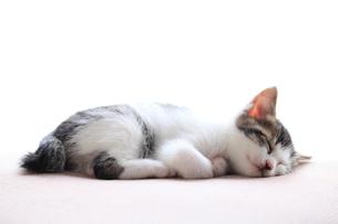 眠る子猫の写真素材 [FYI02837839]