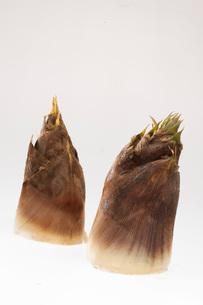 筍の写真素材 [FYI02837889]
