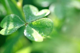 草と朝露の写真素材 [FYI02837905]
