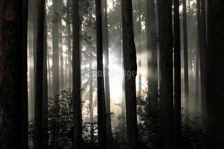 熊野古道から見た森の木漏れ日の写真素材 [FYI02837926]
