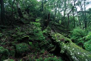 那智ノ滝 源流の森の写真素材 [FYI02837932]