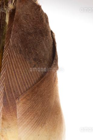 筍の写真素材 [FYI02837962]