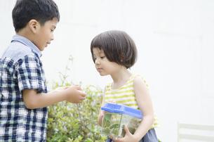 昆虫採集している子供たちの写真素材 [FYI02838000]