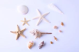 貝殻イメージの写真素材 [FYI02838081]