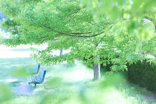 春の公園の写真素材 [FYI02838165]