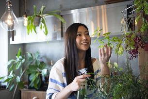 植物にスプレーをしている女性の写真素材 [FYI02838244]