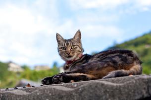 尾道の猫の写真素材 [FYI02838521]