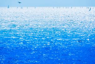 逆光の海とヨットとカモメの写真素材 [FYI02838536]