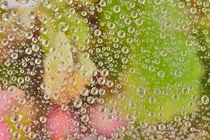 クモの糸と水玉と花の写真素材 [FYI02838573]