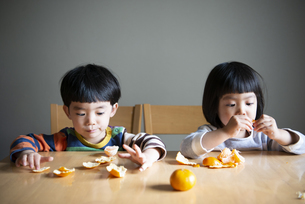 みかんを剥いている子供たちの写真素材 [FYI02838602]