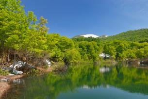 地蔵池の新緑と残雪の月山の写真素材 [FYI02838638]