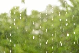 雨と森の写真素材 [FYI02838647]